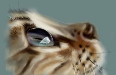 cat's eyes..^^ | akira | Digital Drawing | PENUP