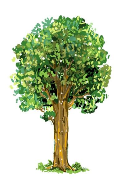 나무   Jiyun   Digital Drawing   PENUP