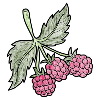 Holly Raspberrys | avictorias13 | Digital Drawing | PENUP