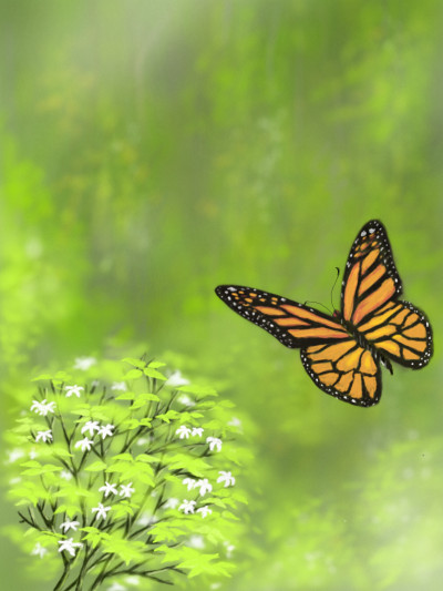butterfly  | abdulrahman | Digital Drawing | PENUP