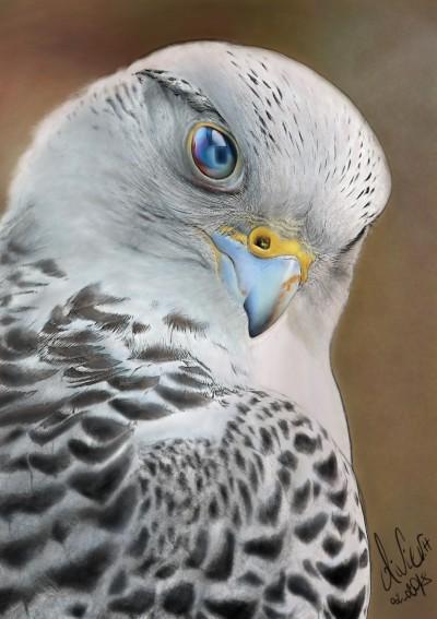 Falco  | artgraphit | Digital Drawing | PENUP