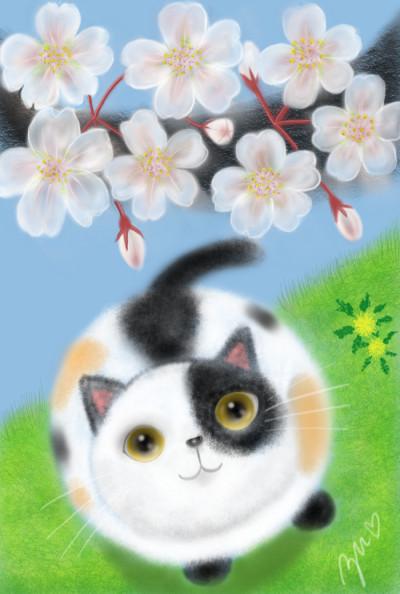 花見  hanami  ❀cherry blossoms❀ | azu | Digital Drawing | PENUP