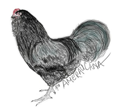 Ameraucana, Black Cockerel   AHY   Digital Drawing   PENUP