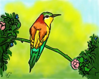 Pássaro | Katicia | Digital Drawing | PENUP