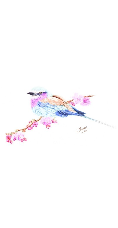 Lilac Breasted Roller | Theresa | Digital Drawing | PENUP