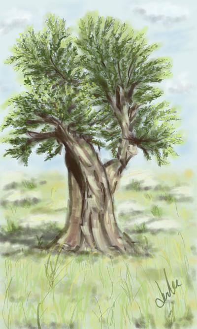 zeytin ağacı  | dml1704 | Digital Drawing | PENUP