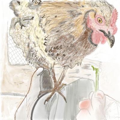 Lauren Buhkaw, chicken hen   AHY   Digital Drawing   PENUP
