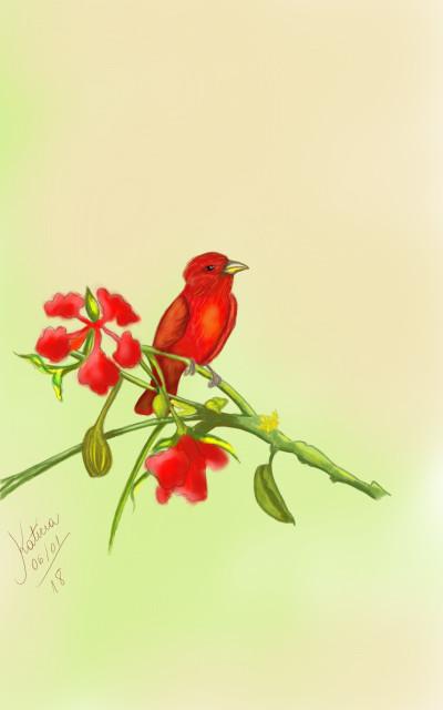 Pássaro  do Verão  | Katicia | Digital Drawing | PENUP