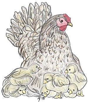 Mother Hen   AHY   Digital Drawing   PENUP