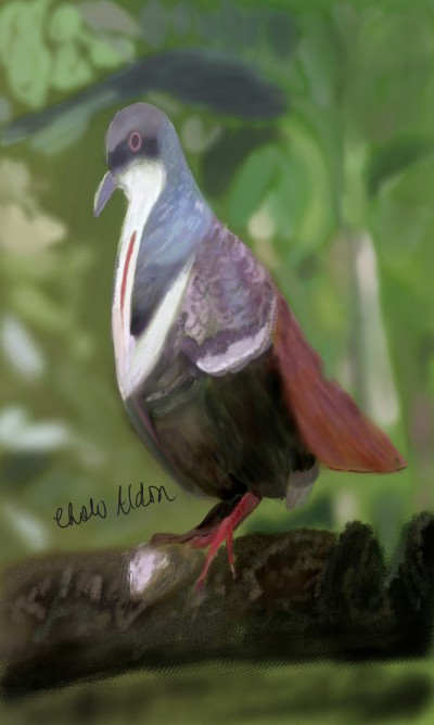 EndangeredPigeon | Choloaldon | Digital Drawing | PENUP