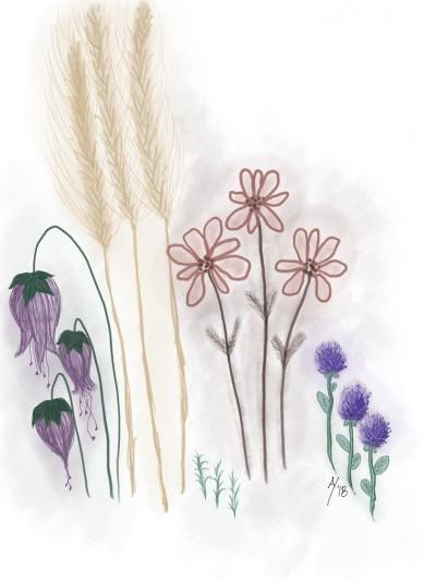 Prairie Picks   AHY   Digital Drawing   PENUP