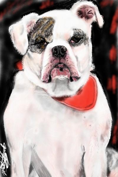 bulldog mix | mburdick | Digital Drawing | PENUP