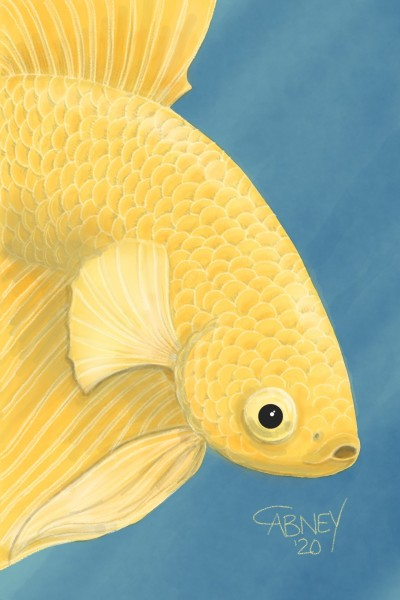 Yellow Betta | shadowmare72 | Digital Drawing | PENUP