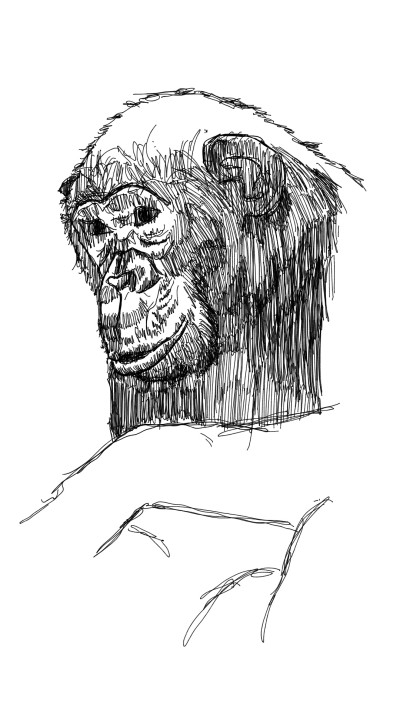 chimpanzee | panduaa | Digital Drawing | PENUP