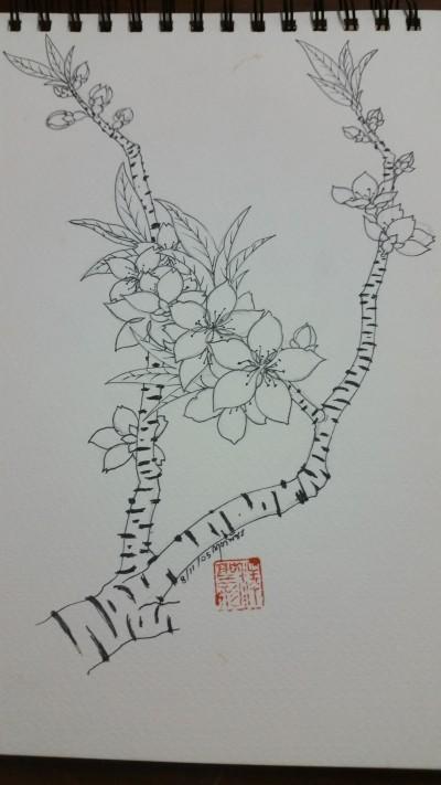 ดอกบ๊วย | NuKrit | Digital Drawing | PENUP