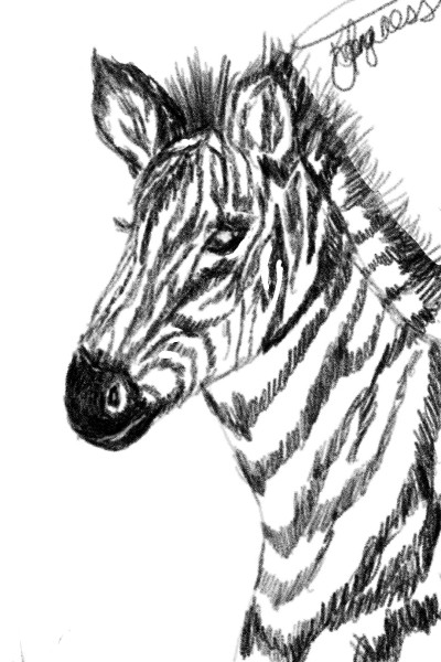 Zebra  | _Katlyn_L | Digital Drawing | PENUP