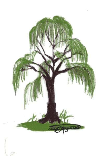 Tree  | _Katlyn_L | Digital Drawing | PENUP