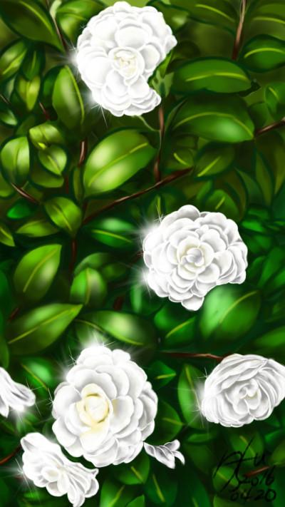 하얀 동백꽃(white camellia)   sun.u   Digital Drawing   PENUP