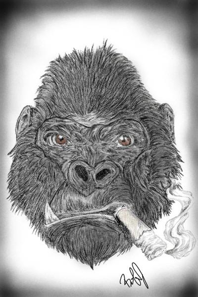 smokin' gorilla    nyyankeehitman   Digital Drawing   PENUP