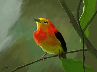 Uirapuru   Lucs   Digital Drawing   PENUP