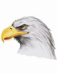 Eagle | ArchDes02 | Digital Drawing | PENUP