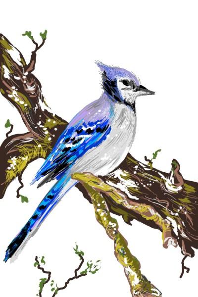 Blue Jay | AntoineKhanji | Digital Drawing | PENUP