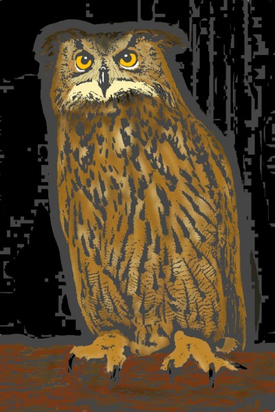 Owl | Morejon | Digital Drawing | PENUP