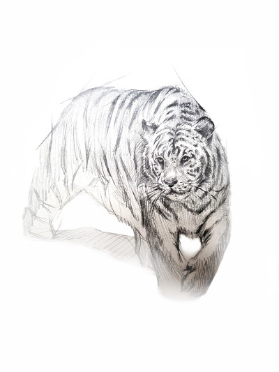 Siberian Tiger   KWON   Digital Drawing   PENUP