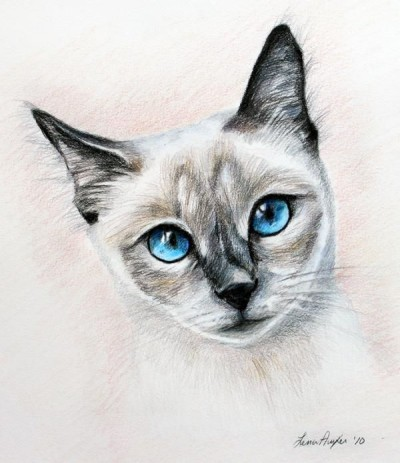Cat | ArtisticFeeds | Digital Drawing | PENUP