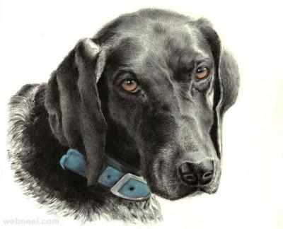 Dog | ArtisticFeeds | Digital Drawing | PENUP