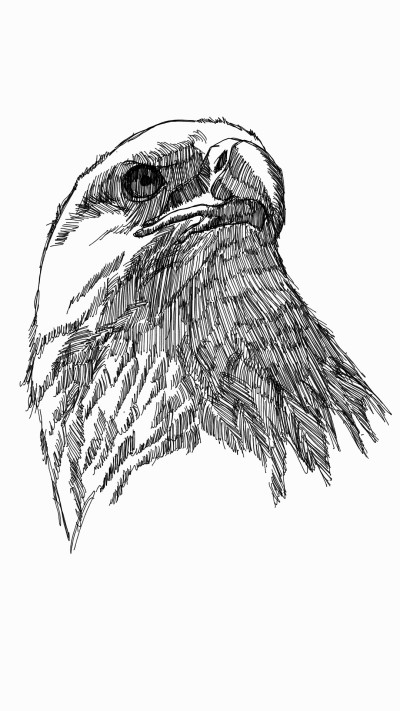 eagle | panduaa | Digital Drawing | PENUP