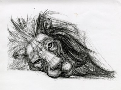 Lion Sketch | ArtisticFeeds | Digital Drawing | PENUP