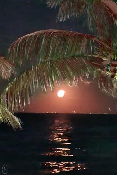 Coco beach | Sintese | Digital Drawing | PENUP