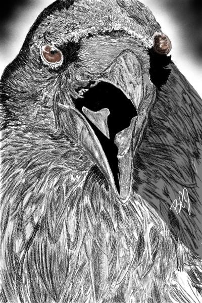raven   nyyankeehitman   Digital Drawing   PENUP