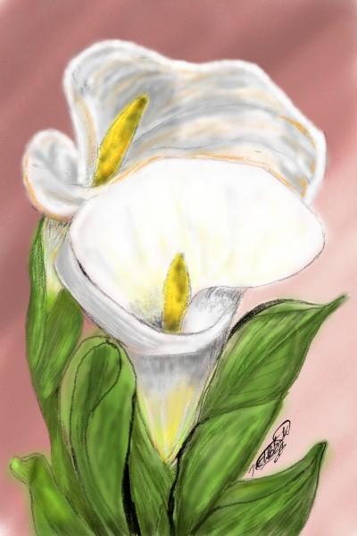 Calla Lilies  | mburdick | Digital Drawing | PENUP