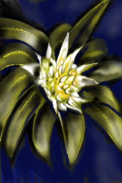 Plant Digital Drawing | les | PENUP