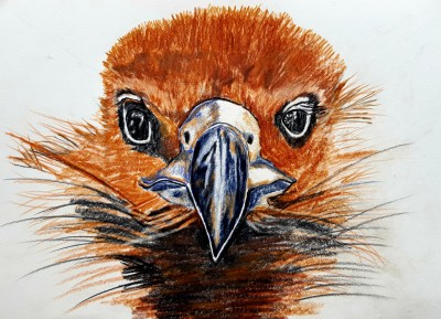 Animal Digital Drawing | Ano | PENUP