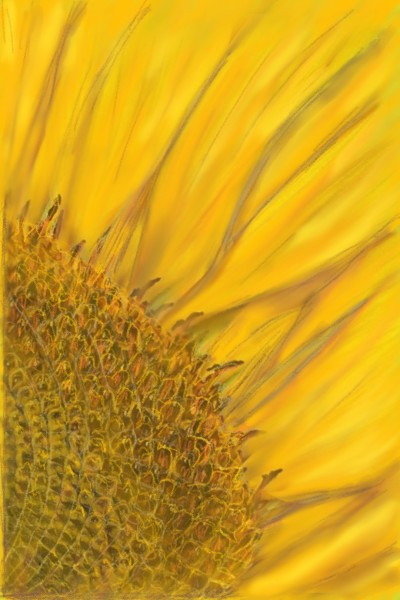 Sunflower | ACDL | Digital Drawing | PENUP