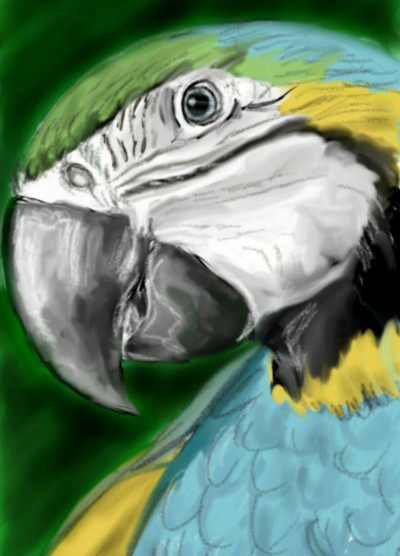 bird1 | EvaGal | Digital Drawing | PENUP