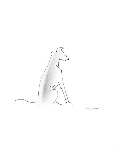 Italian greyhound   KWON   Digital Drawing   PENUP