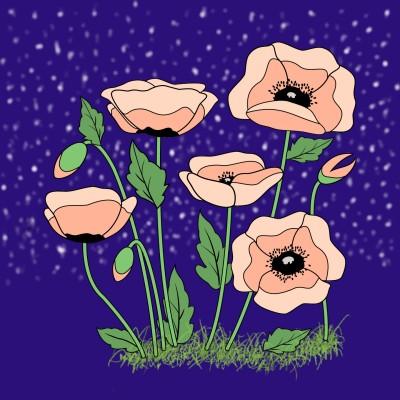 Poppies  | Trish | Digital Drawing | PENUP
