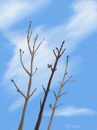My little tree | cici | Digital Drawing | PENUP