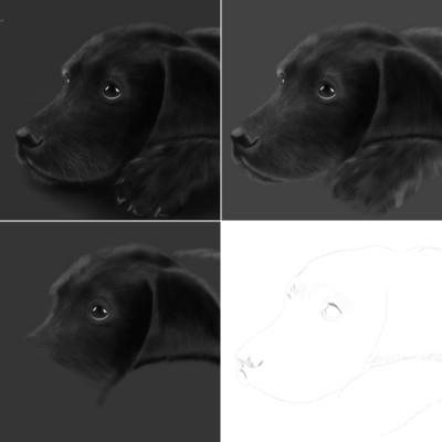labardor drawing tips ;) | Erkan-Beyatli | Digital Drawing | PENUP