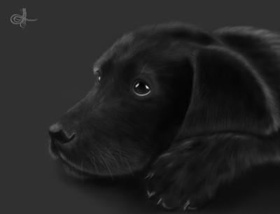 Labrador | Erkan-Beyatli | Digital Drawing | PENUP