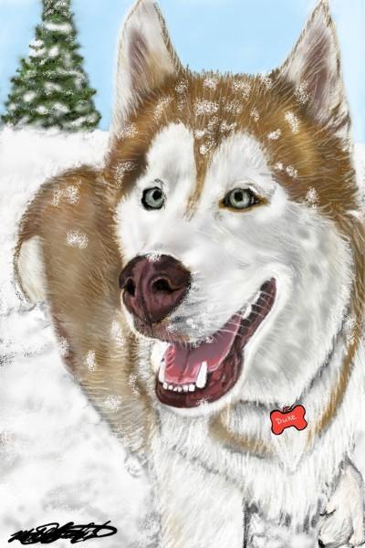 Duke the Husky | mburdick | Digital Drawing | PENUP