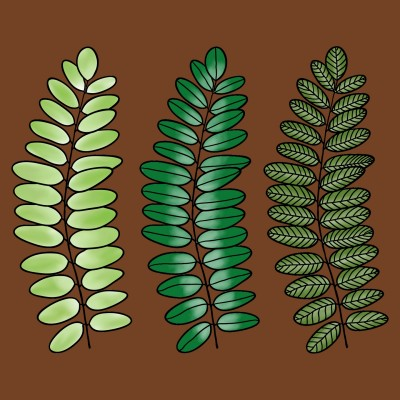 Fern Leaves  | Trish | Digital Drawing | PENUP
