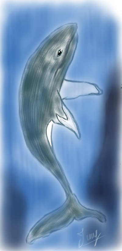 whalework | SoloSketch | Digital Drawing | PENUP