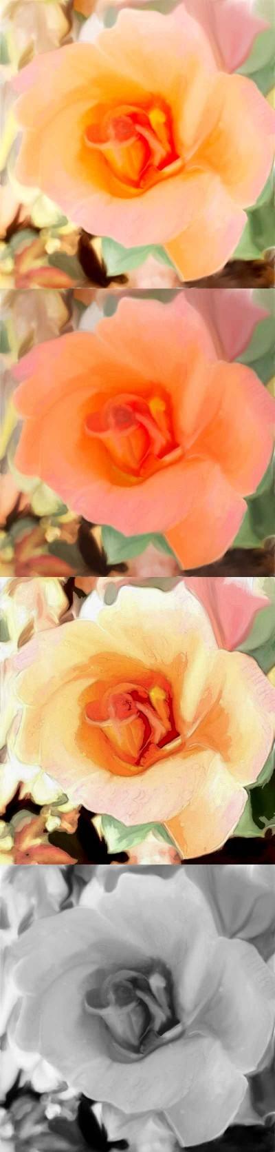 Rose in my garden | sulakshana | Digital Drawing | PENUP