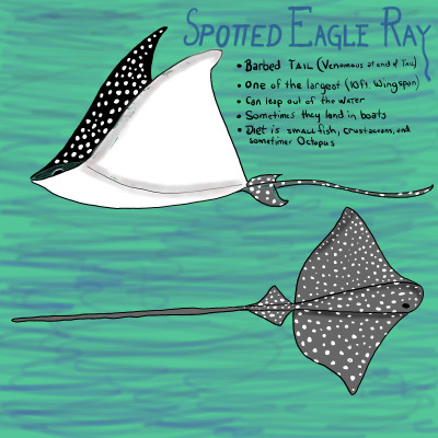 Spotted Eagle Ray | Dwight | Digital Drawing | PENUP