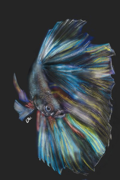 Betta fish | Elizabeth | Digital Drawing | PENUP